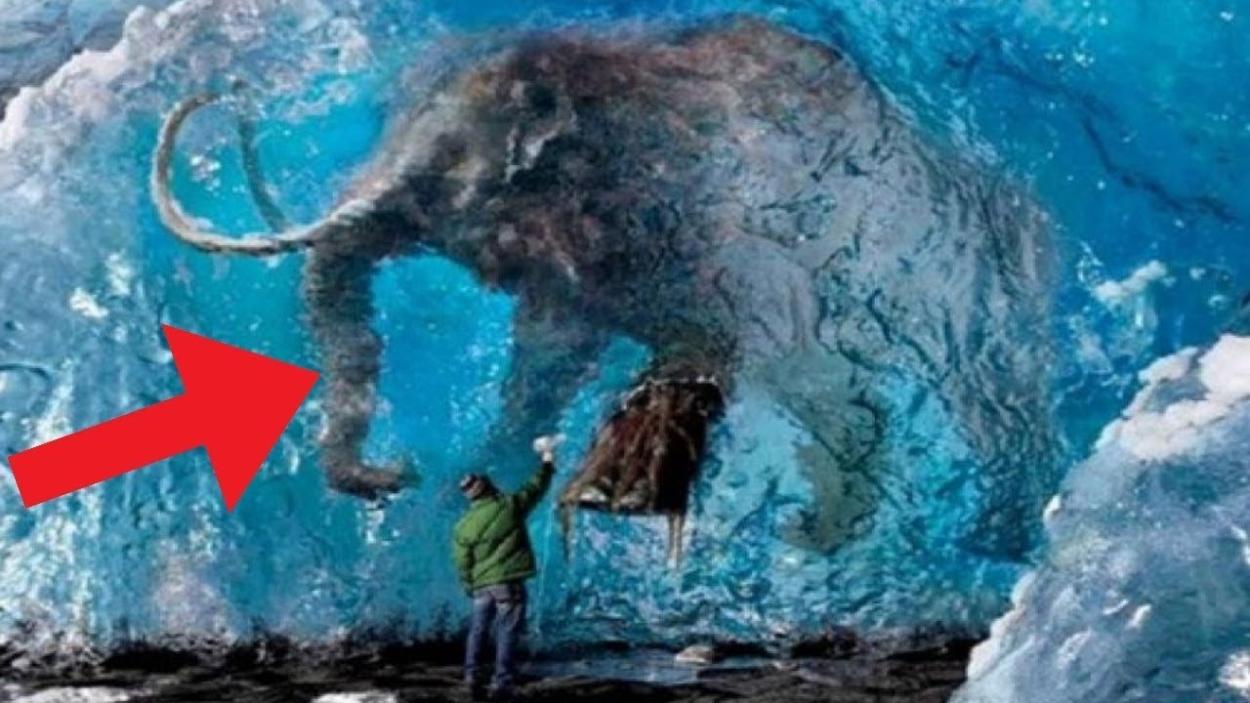 Animals-Found-FROZEN-In-Ice!