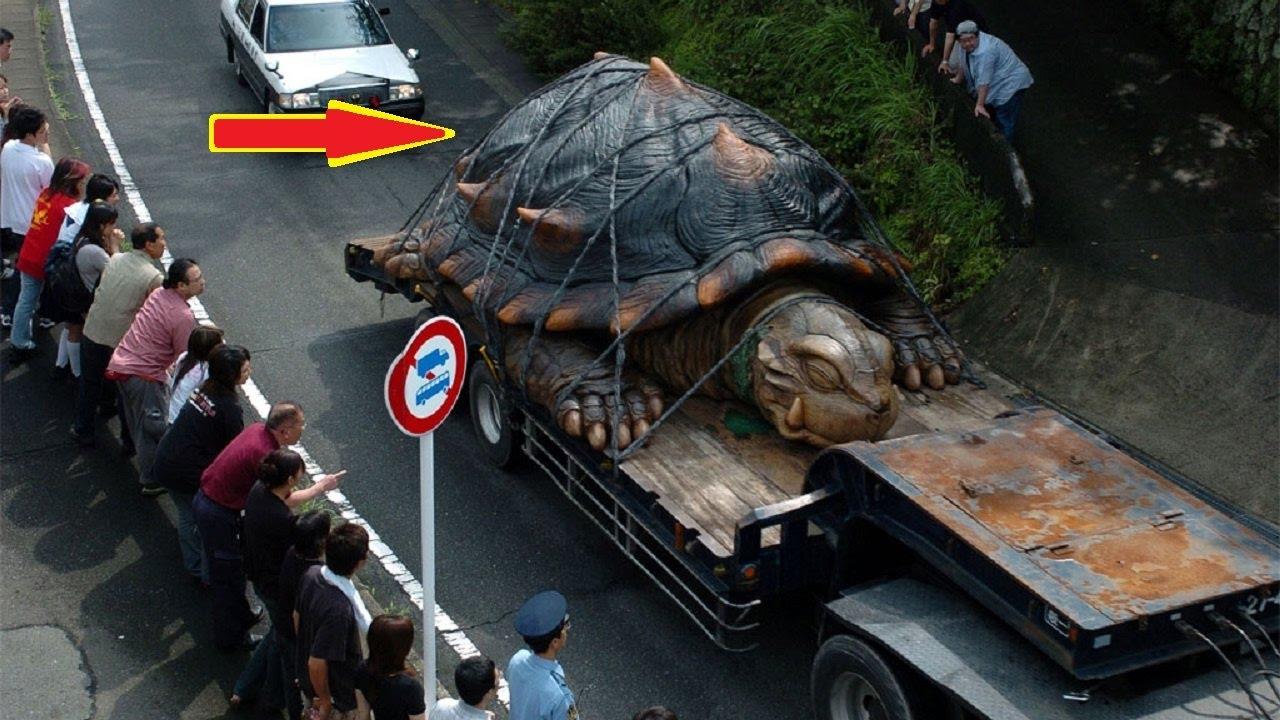 दुनिया-के-7-सबसे-बड़े-जानवर-7-World's-largest-Biggest-animal