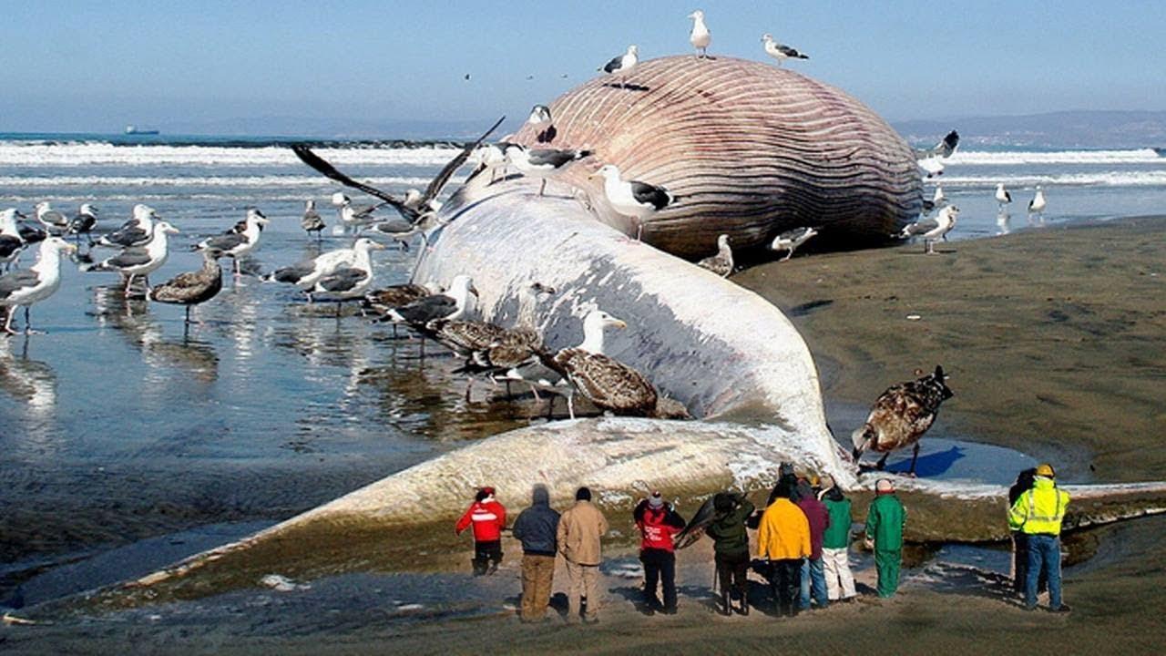 दुनिया-के-5-सबसे-बड़े-जानवर-Biggest-animal-in-the-world-in-hindi