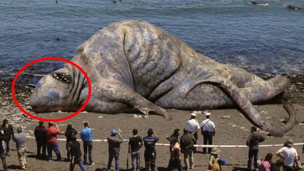 दुनिया-के-5-सबसे-बड़े-जानवर-Biggest-Animal-In-The-World-Deadliest-Animals-You-Won't-Believe-Exist!